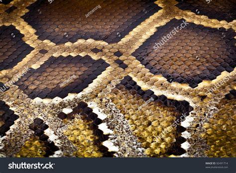 python pattern html boa or python snake pattern skin from alive body in