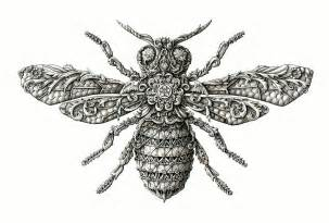 doodle bug scientific name incredibly intricate renaissance style insect drawings by