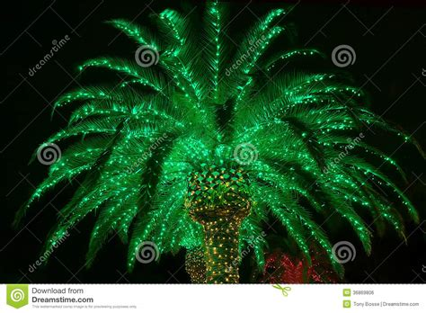lit palm tree outdoor lit outdoor palm tree royalty free stock image