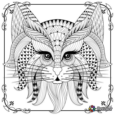 cat zentangle coloring page cute cat zentangle to colour coloring adult colouring