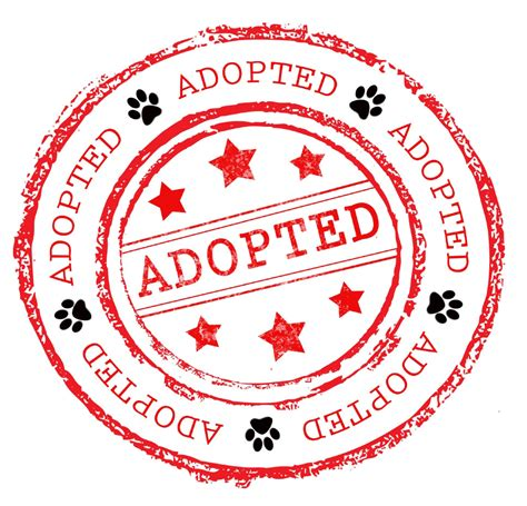 Brangelinas Adoption To Be Processed In Weeks by Adopted Animals September 5th To September 11th