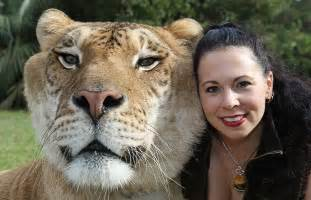 Long liger who holds the guinness world record for the largest cat