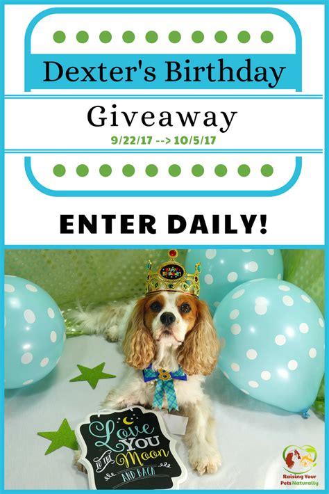 dexter the dog s birthday blog giveaway pet contest 2017 - Pet Giveaway