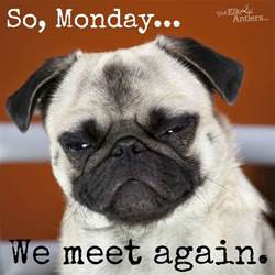Monday Dog Meme - we meet again monday dog funny funny animals