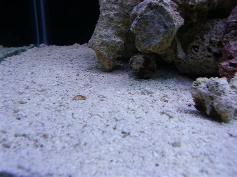 sand bed epoxy for faux sand bed the reef tank
