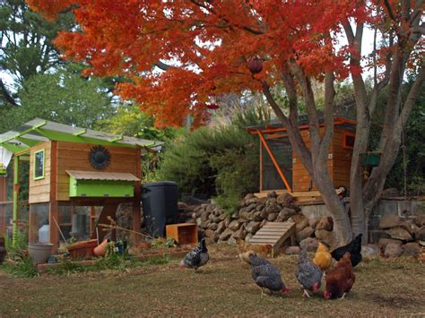 Cool Shed Plans chicken coop plans and kits thegardencoop com