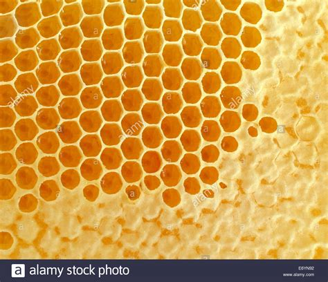 Honey Comb Honeycomb honeycomb or honey comb background created by bees as a healthy stock photo 73138830 alamy