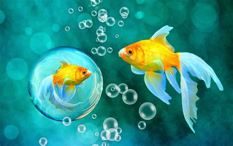 wallpaper colorful fish and interactive water bubbles goldfish blue bokeh sea fish fishes underwater