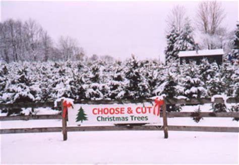 christmas tree farms erie county ny solvang tree farm