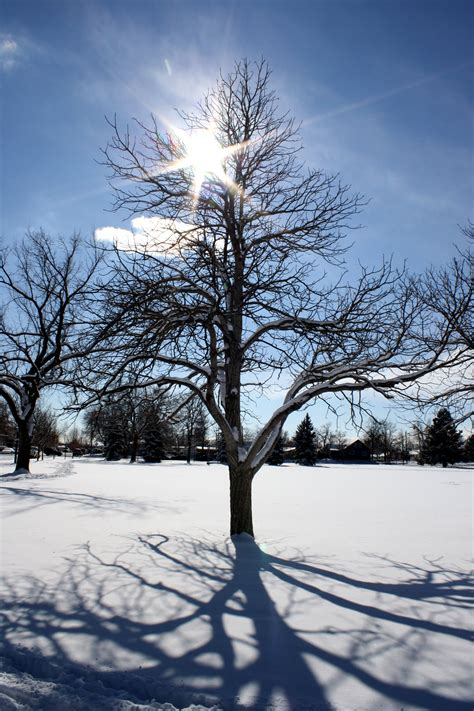 winter tree sun through winter tree branches picture free photograph