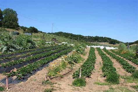 find fresh seasonal produce  indian valley organic farm