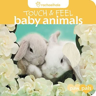 My Own Kitten Touch And Feel Board Book Buku Impor Anak touch and feel baby animals book by rachael hale 1 available editions alibris books