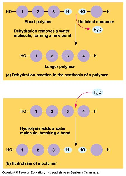 carbohydrates uses by living things chapter 2 pptx on emaze