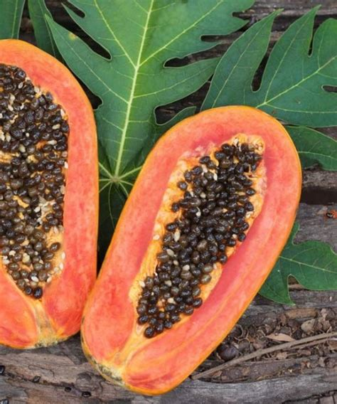 Liver Detox Papaya by Papaya Seeds Benefits For Gut Health Liver And Kidney Detox