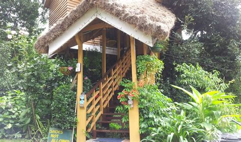 Tree Cottage Manali by Tree House Cottage Manali Rooms Rates Photos Reviews