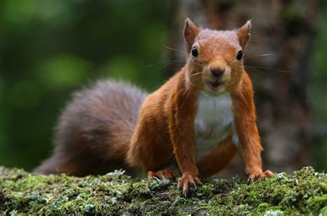 Red squirrels! Adorable, right? Wrong ? they're riddled with leprosy ? The Register