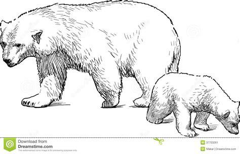 B W Sketches by Orso Bianco Con Il Cucciolo Immagine Stock Immagine