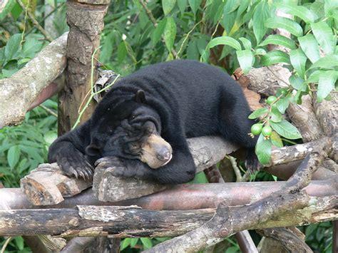 Javara Madu Hutan Hitam Kalimantan Black Honey justin bieber fans wisata petualangan hutan tropis kalimantan fear factor sejati