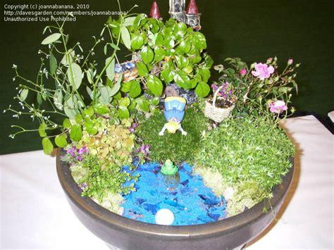Mini Japanese Garden by Specialty Gardening Miniature Japanese Garden 1 By