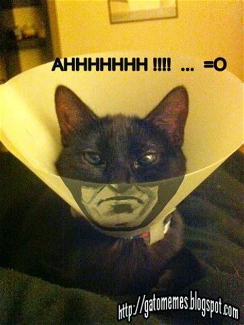 im 225 genes de perros y gatos graciosas para el whatsapp descargar imagenes de gatos graciosos socalimodelscom im
