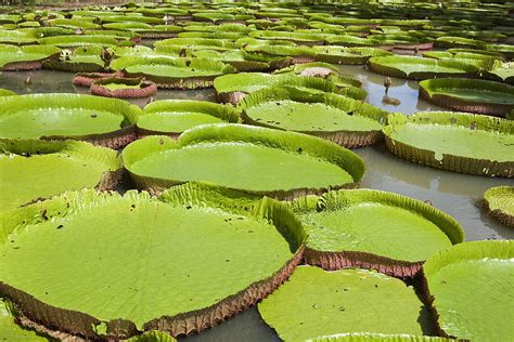 Botanical Garden Mauritius Get Ready To Experience A Trip To Mauritius And Fill Up With And Relaxation Web Feed 360