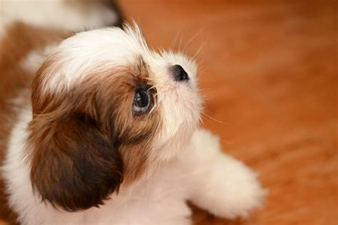 how to teach a puppy its name how to teach a puppy its name 12 steps wikihow