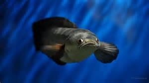 1920x1080 fond d 233 cran aquarium hd 1920x1080 fonds