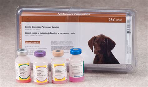 coronavirus in dogs vaccines parvovirus and or coronavirus vaccines for dogs
