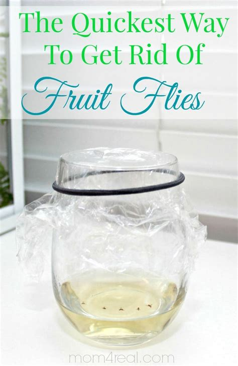 how to get rid of gnats in bedroom how to get rid of fruit flies or gnats tip of the day