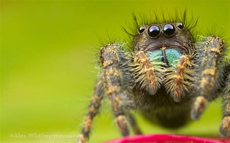 Cute Spiders Phil Ebersole S - insect wallpaper
