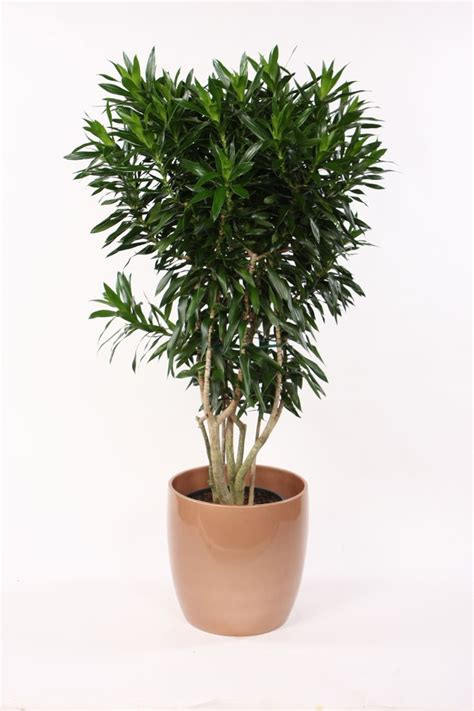 indoor plants india 1000 images about houseplant wishlist on pinterest
