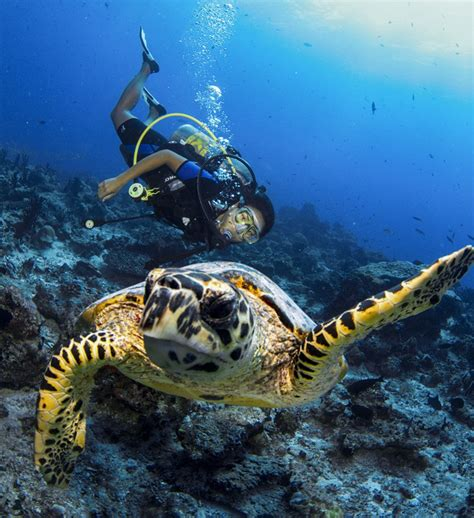 dive holidays luxury dive holidays at cocoon maldives resort
