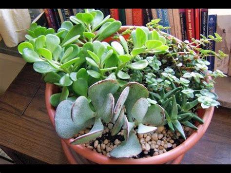 best indoor plants for oxygen best house plants best house plants for oxygen youtube