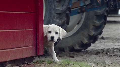 budweiser puppy budweiser unleashes its lost bowl ad hoping to catch lightning adweek
