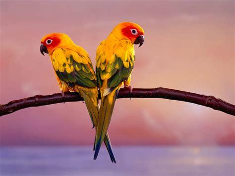 wallpaper full hd parrot most beautiful parrots 1080p wallpapers birds hd