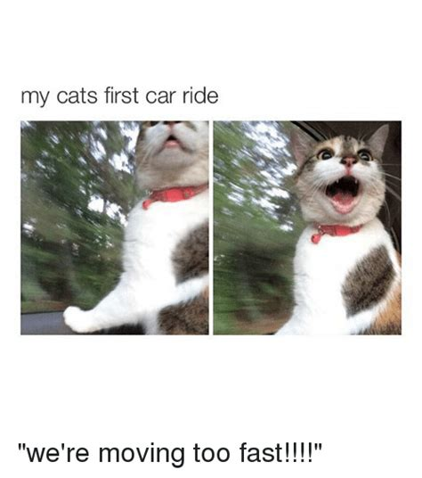 We Are The Cat On Tour by 25 Best Memes About Cat Cat Memes