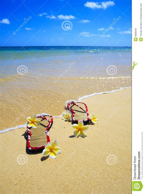 Nature Sandal Hawaii Sandals Sandals Tropical Sandals 1203 sandals and flowers on a hawaii royalty free stock photos image 9369378