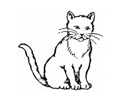 realistic cat coloring page realistic cats head coloring pages