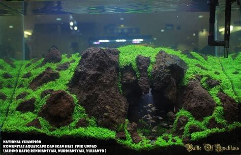 best substrate for aquascaping best substrate for aquascaping 28 images jan simon