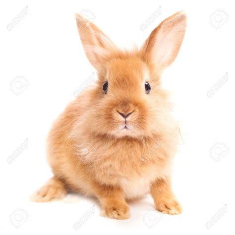 imagenes animales sin fondo 41 im 225 genes de tiernos y dulces conejos y liebres