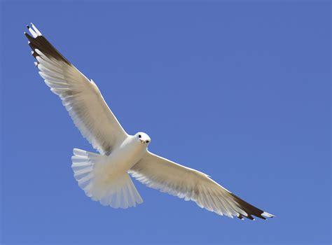 pamela leigh richards 187 as a bird flies so will i