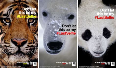 Tiger Denmark wwf warns you with snapchat for the lastselfie osocio