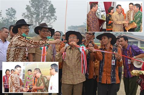 Bibit Sapi Brahmana sapi brahman 22 bibit unggulan terbaru diluncurkan di sembawa