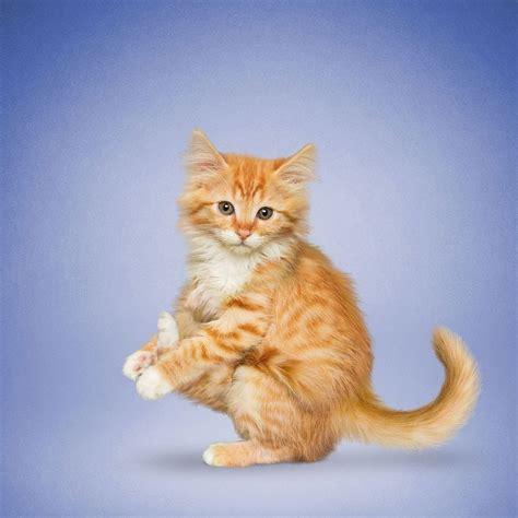 imagenes de perro haciendo yoga nada m 225 s tierno y motivador que estos gatos y perros