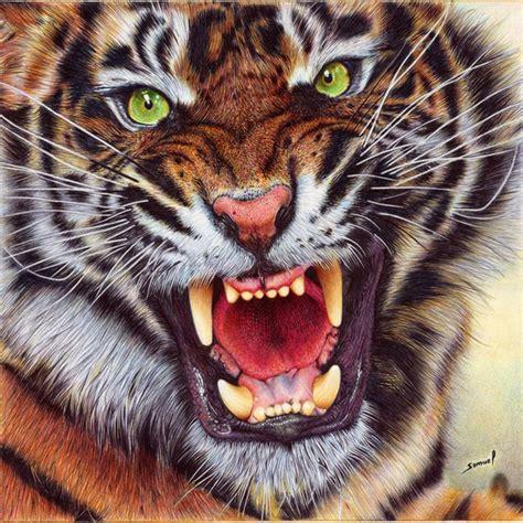 imagenes de jaguar blanco angry tiger ballpoint pen by vianaarts on deviantart