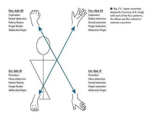 Pnf Pattern Video | pnf d1 d2 patterns physical therapy all classes with