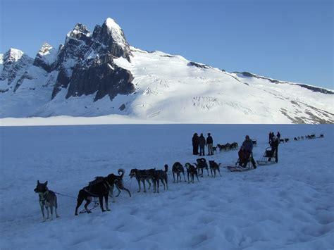 alaskan sled dogs alaska sledding