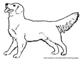 golden retriever puppy coloring pages breed coloring pages