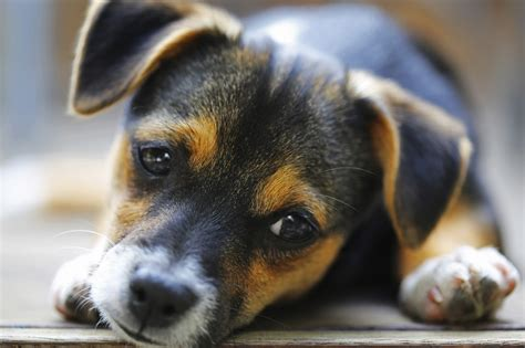 puppy care 101 your bundle of puppy care 101 lone tree veterinary center