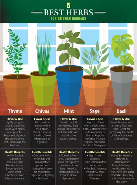 herb kitchen 5 kitchen herbs for small garden spaces fix